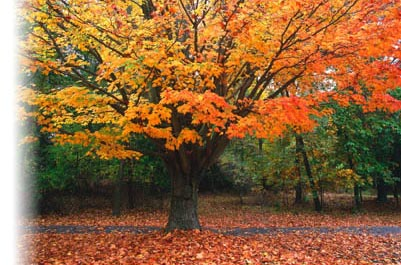 [Beautiful fall foliage marks the relaxing and comfortable clinical environment of the Psychiatric Alliance of the Blue Ridge]